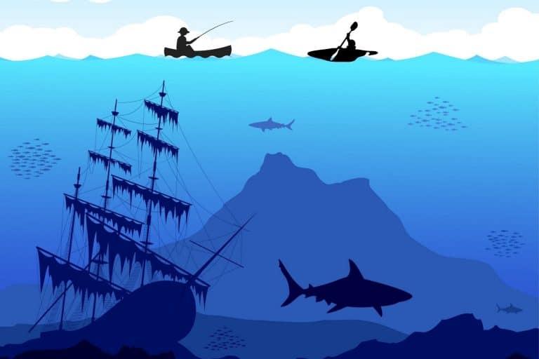 Kayaks and Sharks
